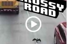 So spielt man Crossy Road richtig! Einfach, oder?